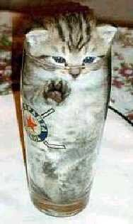 cat_in_glass.jpg